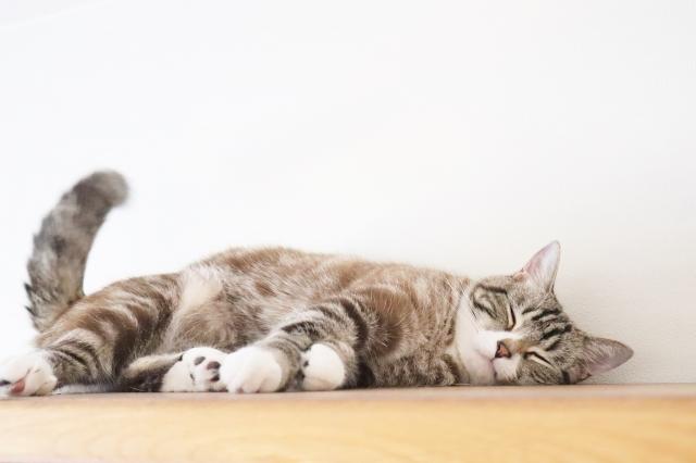 受験勉強における睡眠について